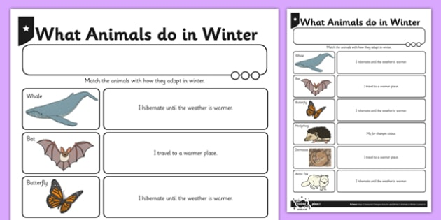 What Animals Do in Winter - animals in winter, animals adapting, animals, winter, adapting, science