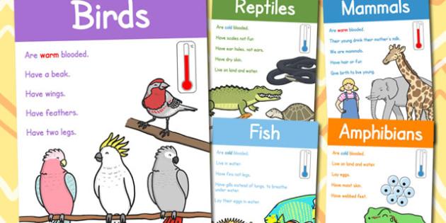 Animal Groups Display Posters - australia, animal, group, display