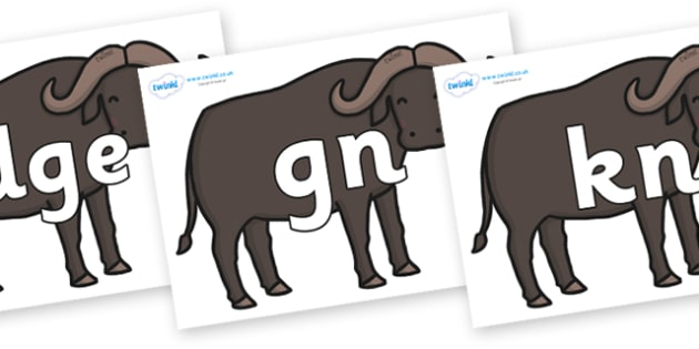 Silent Letters on Buffalos - Silent Letters, silent letter, letter blend, consonant, consonants, digraph, trigraph, A-Z letters, literacy, alphabet, letters, alternative sounds
