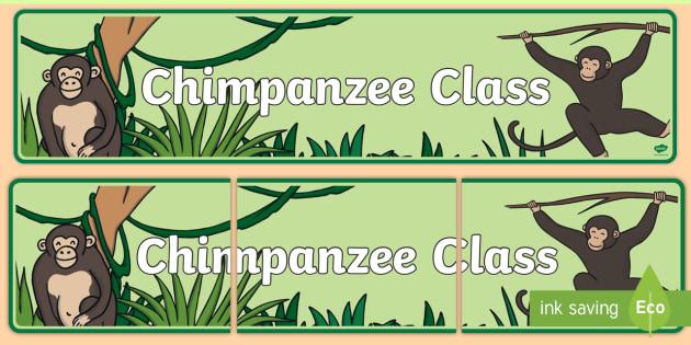 Chimpanzee Class Display Banner - chimpanzee, class, display banner
