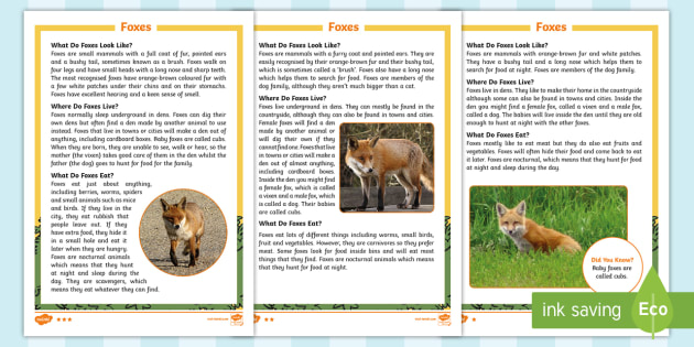 KS1 Foxes Differentiated Fact File - Children's Books, story, book, Easter, save, saving, Easter Bunny, bunny, bunnies, stories, chick,