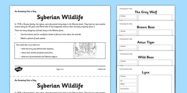 Siberian Wildlife Activity Sheet - siberian, forest, wildlife, fact of the day, activity, worksheet