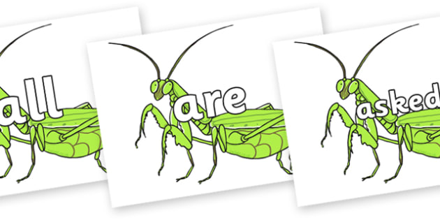 Tricky Words on Praying Mantis - Tricky words, DfES Letters and Sounds, Letters and sounds, display, words