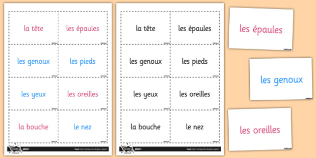 French My Body Heads Shoulders Knees Toes Vocabulary Flashcards