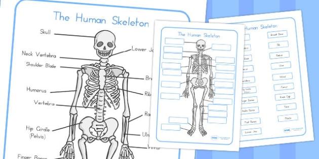 Human Skeleton Labelling Sheets - australia, skeleton, label