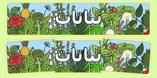 لوحة عرض النبات - بانر، النبات، وسائل تعليمية، موارد، عربي