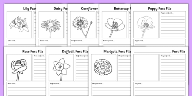 Flowers Fact File Sheets - flowers, fact file, sheets, fact, file, activity
