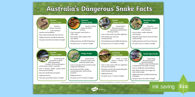Australia's Dangerous Snakes A4 Display Poster - Australian Animals, reptiles, cloze passages, activity sheets, word search, research, fast finisher,