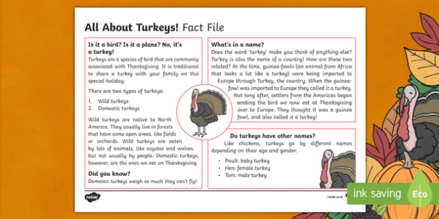 All About Turkeys Fact File