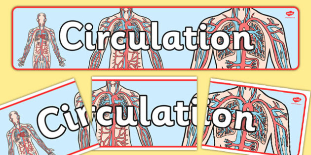 Circulation Display Banner - circulation, display banner, display