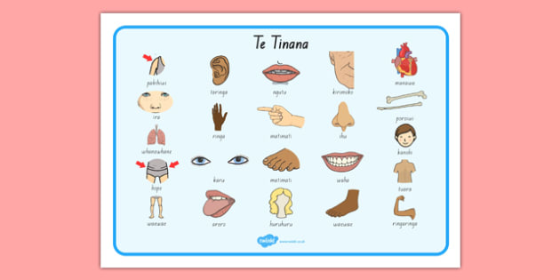 My Body Word Mat Te Reo Māori - nz, new zealand, literacy, writing, words, colouring, body, me, myself, science, ourselves, words