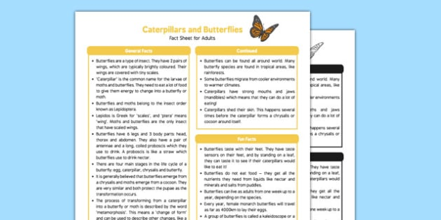 Caterpillars and Butterflies Fact Sheet for Adults - EYFS, Early Years, KS1, Key Stage 1, understanding the world, science, minibeasts, life cycles, Eric Carle