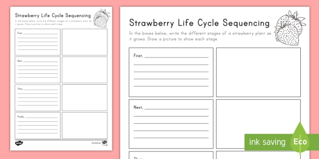 Strawberry Life Cycle Sequencing Activity Sheet - strawberries, strawberry plants, strawberry farming, strawberry picking, Worksheet, strawberry plant