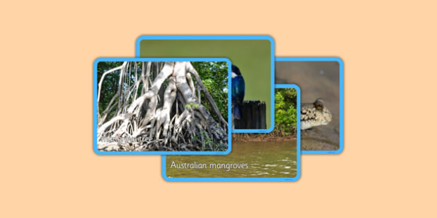 Australian Mangrove Habitat Photo Display Pack - australia, Science, Habitats, Australian Curriculum, Mangroves, Living, Living Adventure, Good to Grow, Ready Set Grow, Life on Earth, Environment, Living Things, Animals, Plants, Photos, Photographs,