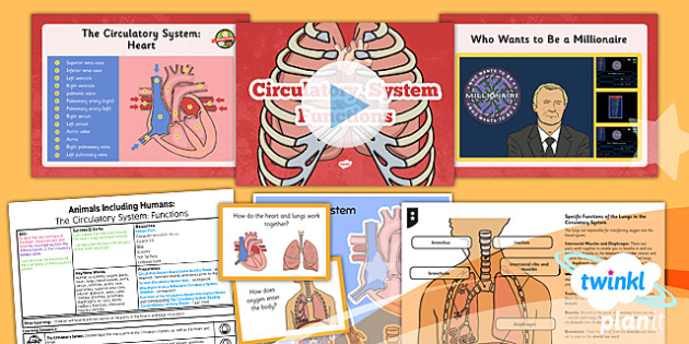 Science: Animals Including Humans: The Circulatory System Functions Year 6 Lesson Pack 2