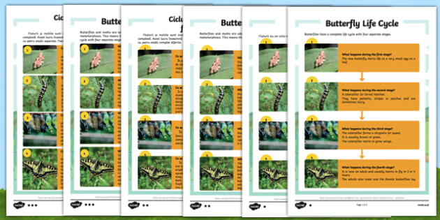 Butterfly Life Cycle Differentiated Reading Comprehension Activity Romanian Translation - romanian, KS1 reading, year 2, y2, comprehension, questions, butterfly, butterflies, life cycle