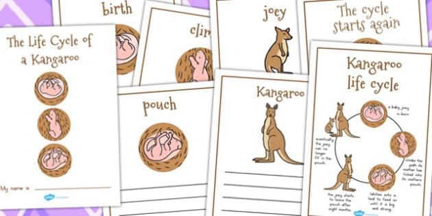 Kangaroo Life Cycle Workbook - lifecycle, life cycles, australia