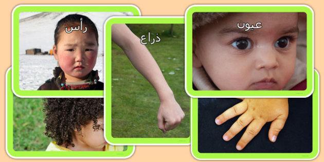 باقة صور أجزاء الجسم - أجزاء الجسم، موارد تعليمية، وسائل تعليمية