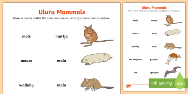 Uluru Mammals Word and Picture Matching Activity Sheet-Australia, worksheet