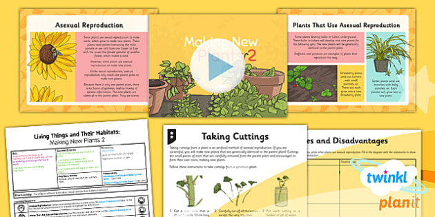 PlanIt - Science Year 5 - Living Things and Their Habitats Lesson 2: Making New Plants 2 Lesson Pack - reproduction, asexual, clone, plant cuttings