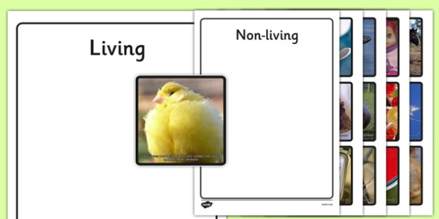 Photo Living and Non-Living Sorting Activity - photo, living, non-living, sorting, activity