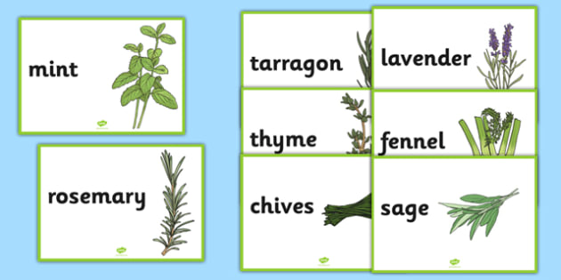 Herb Display Posters A4 - herb, display posters, display, posters