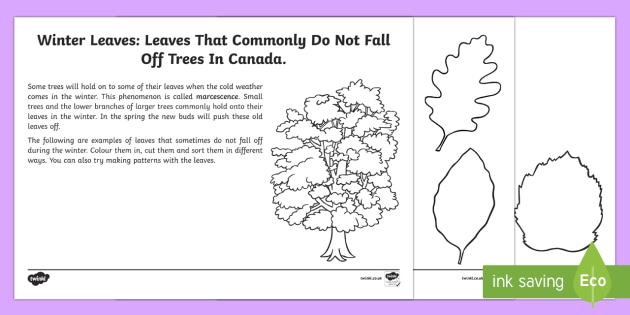 Sorting Leaves Activity Sheet - Autumn Resources, Winter Resources, marcescence, trees, sorting, colouring, worksheet