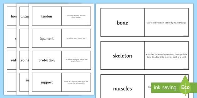 Skeleton and Muscle Loop Cards