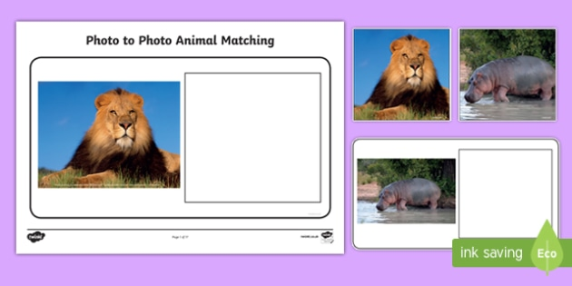 Workstation Pack: Photo to Photo Animal Matching Activity Pack