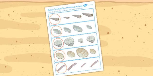 British Seashell Size Matching Worksheets - british, seashell