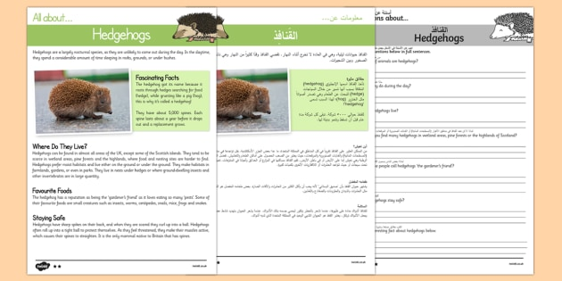 Hedgehogs Reading Comprehension Pack Arabic/English