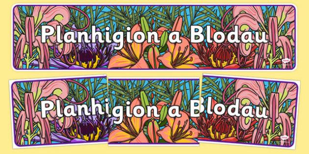 Baner Arddangosfa Planhigion a Blodau - welsh, cymraeg, baner, arddangos, blodau, planhigion