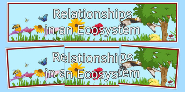 Relationships in an Ecosystem Display Banner - relationships in an ecosystem, ks3, biology, display banner