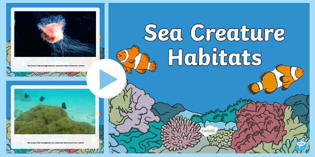 Under the Sea Habitats Video PowerPoint - under the sea, sea habitats, under the sea habitats, sea creature habitats, habitats, habitats powerpoint