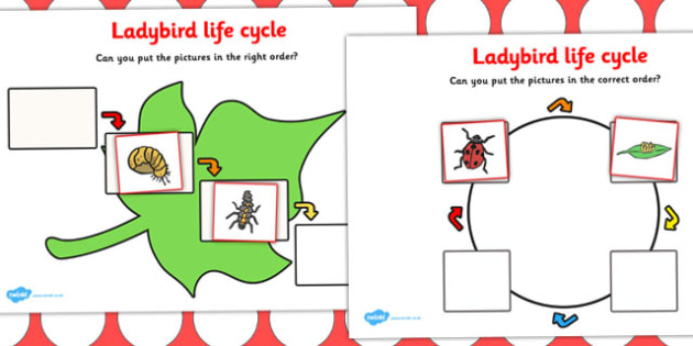 Ladybird Life Cycle Activity - Ladybird, life cycle, Minibeasts, knowledge and understanding of the world, investigation, living things, snail, bee, ladybird, butterfly, spider