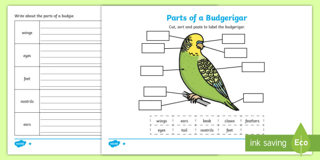 parts of a budgie differentiated activity sheets budgie. Black Bedroom Furniture Sets. Home Design Ideas