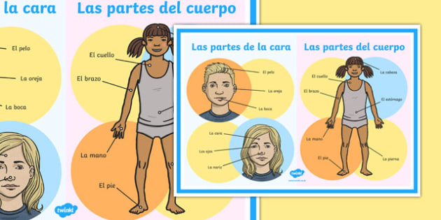 Body Parts Display Poster-Spanish