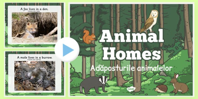 Animal Homes PowerPoint Romanian Translation - romanian, animal homes, powerpoint