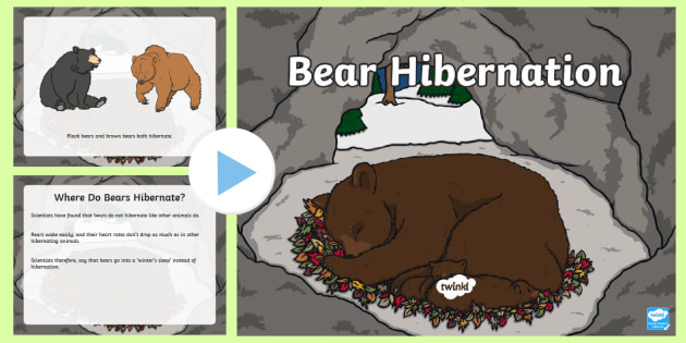 Elementary Bear Hibernation PowerPoint - Great Canadian Animals, Canada, Bear, Hibernate, hibernation, canadian, animal, winter, cold