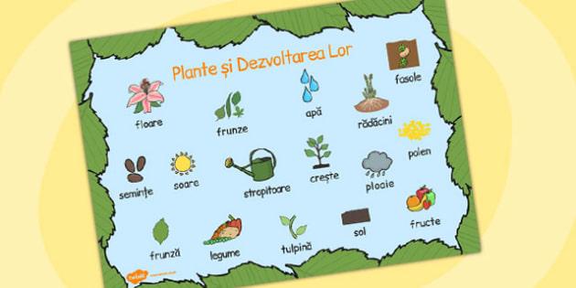 Părțile unei plante și creșterea lor - Planșă cu vocabular - cultivarea plantelor, fișă, creșterea lor, vocabular, cuvinte, lexic, științe, observație, floare, părțile unei plante, creștere, dezvoltare, romanian, materiale, materiale didactice, român