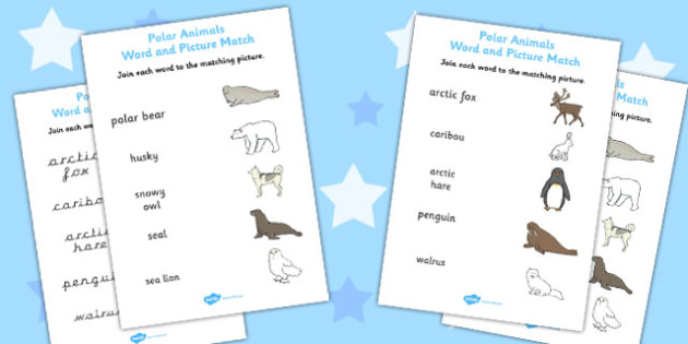Line Of Symmetry Worksheets Animals Word And Picture Matching Worksheet  Worksheets Identify Nouns In A Sentence Worksheet Excel with Excel Binary Worksheet Word Polar Animals Word And Picture Matching Worksheet  Worksheets Worksheets For 8th Grade Math Word