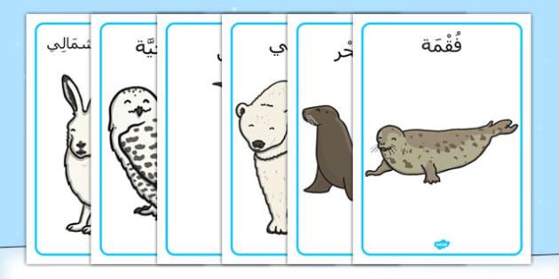 ملصقات عرض حيوات القطب الشمالي - بوسترات، وسائل تعليمية، موارد