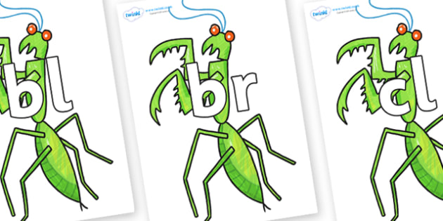 Initial Letter Blends on Praying Mantis to Support Teaching on The Bad Tempered Ladybird - Initial Letters, initial letter, letter blend, letter blends, consonant, consonants, digraph, trigraph, literacy, alphabet, letters, foundation stage literacy