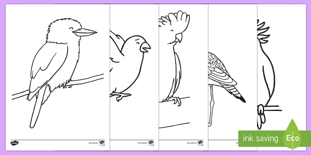 Colouring Pages Kookaburra : Australian birds colouring pages curriculum