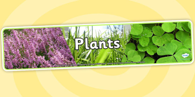 Plants Photo Display Banner - plants, photo display banner, display banner, display, banner, photo banner, header, display header, photo header, photo