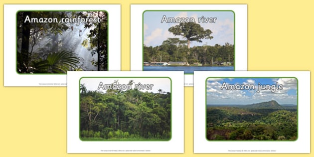 Editable Amazon Photos - editable, amazon, photos, rainforest, jungle, editable photos, edit