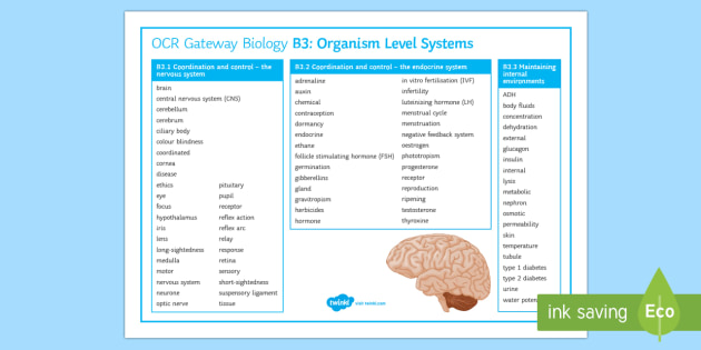 OCR Gateway Biology Topic B3 Organism Level Systems Word Mat - Word Mat, keywords, gcse, Coordination and control, endocrine system, hormones, nervous system, revi