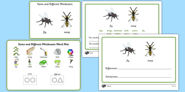 Same and Different Minibeasts - Concept development, language delay, language disorder, semantic links, describing, vocabulary development, autism