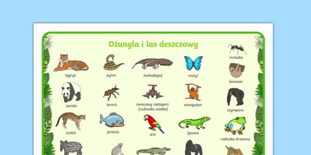 Plansza ze słownictwem Dżungla i las deszczowy po polsku