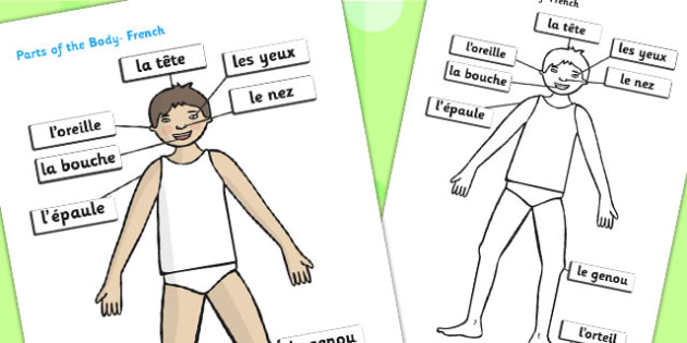 Parts of the Body (French, A4) - parts of the body, French, francais, MFL, Eyes, nose, mouth, display, chest, tongue, ourselves, all about me, my body, senses, emotions, family, body, growth